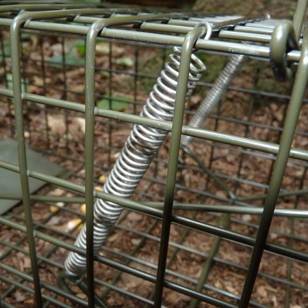 Double spring closing mechanism on PERDIX Grey Squirrel Cage Trap