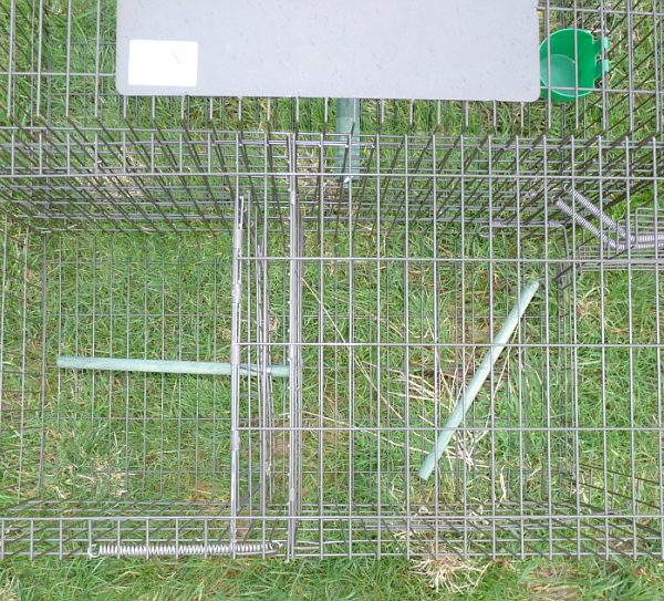 Combination Larsen Cage Trap (side-entry and top-entry)