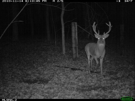 Image of buck at night taken by a Reconyx HC500 HyerFire trail camera