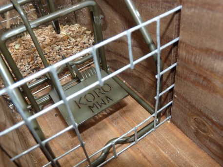 Koro rodent trap set in Perdix rat trapping tunnel