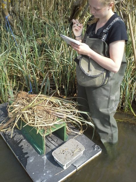 PERDIX Mink raft in use on river by wildlife biologist