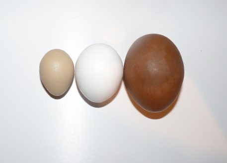 Solid Plastic Dummy Eggs for pigeons partridges pheasants and chickens