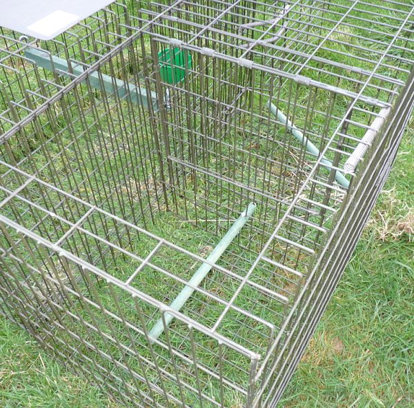 Top-entry compartment of Perdix Larsen Cage Trap