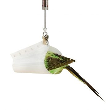 Small bird being weighed using a Pesola Bird Cone and Spring Balance