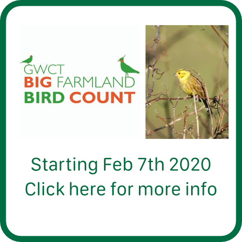 The Big Farmland Bird Count 2020
