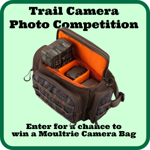 Trail Camera Photo Competition